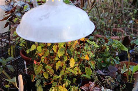 grow light plants indoor lights low types growing indoors plant flowers houseplants garden vines winter hgtv keep outdoor