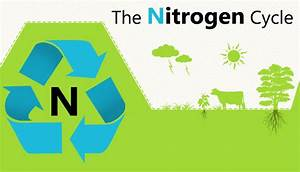 Nitrogen Cycle - Definition  Process And Use