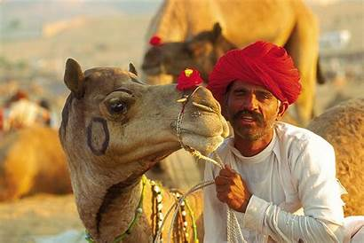 Camel Pushkar Fair India Indian Rajasthani Festival