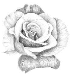 printable roses  color coloring pages  roses radiate  romantic impression  special day