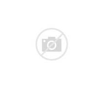 Funny Koala New Photos...