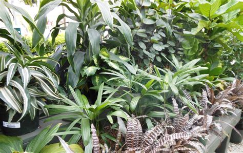 10 Best House Plants For A Healthy Home