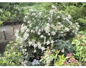 Pflanzen Immergrün Winterhart : pflanzen set vorgarten immergr n 12 3 stk bei hornbach kaufen ~ Markanthonyermac.com Haus und Dekorationen