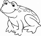 Coloring Pages Frogs Frog Animal sketch template