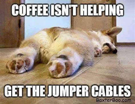 Funny Pics Of Memes - 153 best animal memes images on pinterest