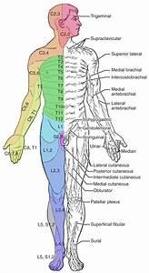 The Sensory And Motor Exams  U2013 Anatomy  U0026 Physiology