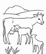 Coloring Cow Pages Animal sketch template