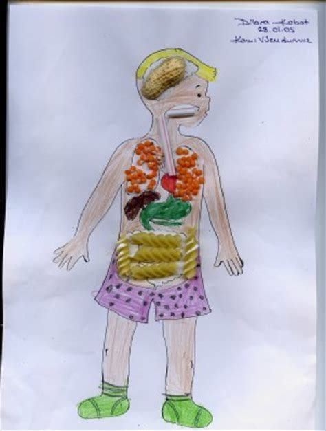 human body activities for preschoolers crafts actvities and worksheets for preschool toddler and 737