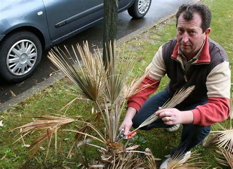 au jardin d agrumes le 187 conseil que faire quand mon palmier a gel 233
