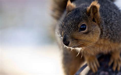 cute squirrel pictures - HD Desktop Wallpapers | 4k HD