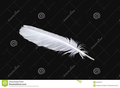 The White Feather Of A Bird Stock Image