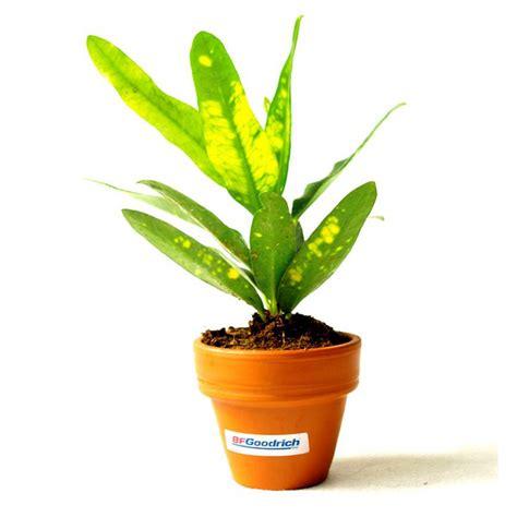 plante de bureau plante d 233 polluante de bureau en pot terre cuite objet