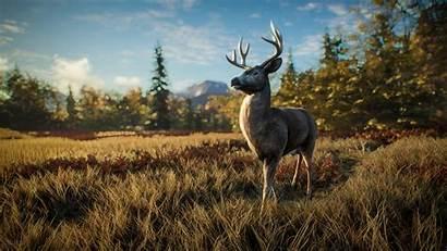 Wild Call Thehunter Hunter Wallpapers Hintergrundbilder Wind