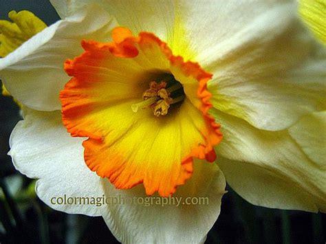 100 Macro Flowers Saturday