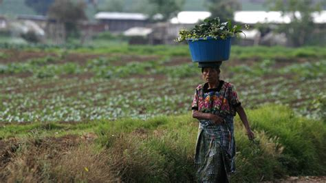 trade agreement sends poor farmers  jail