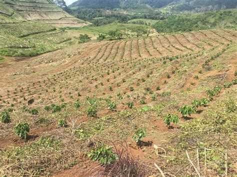 Rapid growth in coffee production in south america during the second half of the 19th century was matched by growth in consumption in. Coffee plantation for sale in Costa Rica, ID CODE: #2176