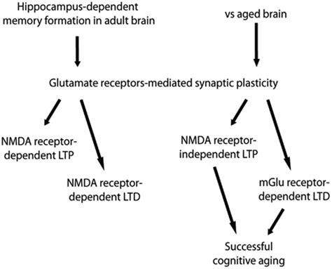 Full Form Of Nmda by Frontiers Group 1 Metabotropic Glutamate Receptor