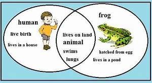 Frog Characteristics