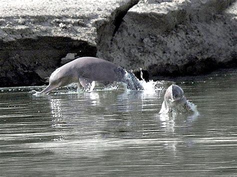 baiji dolphin ocean treasures memorial library