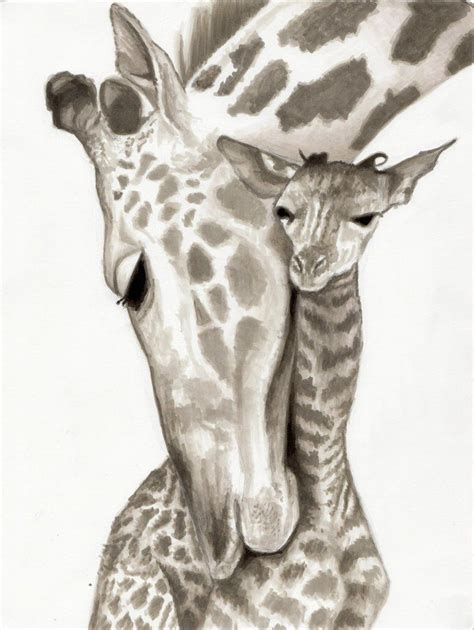 baby giraffe pencil drawing  images  drawing