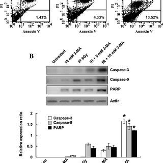 figure 2 autophagy inhibition increases 3 ma significantly attenuated jnk and akt activities and decreased bax scientific