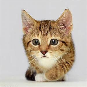 25 Cute kitten pictures | Amazing Creatures