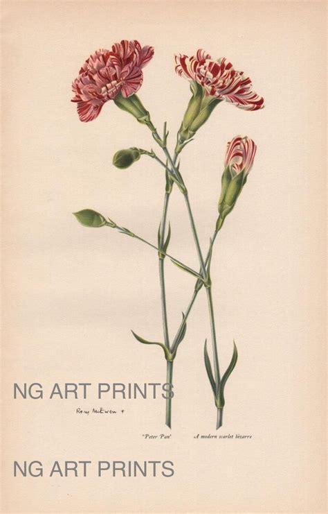 botanical prints carnation tattoo ideas carnation