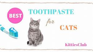 8 Best Toothpaste For Cats For 2020  Full Guide And