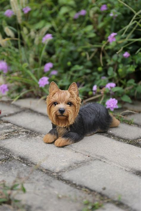 gift  yorkshire terrier dog lying  statue