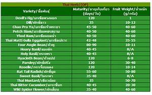 Seed Sprouting Chart Thai Herbs Lion Seeds Co Ltd