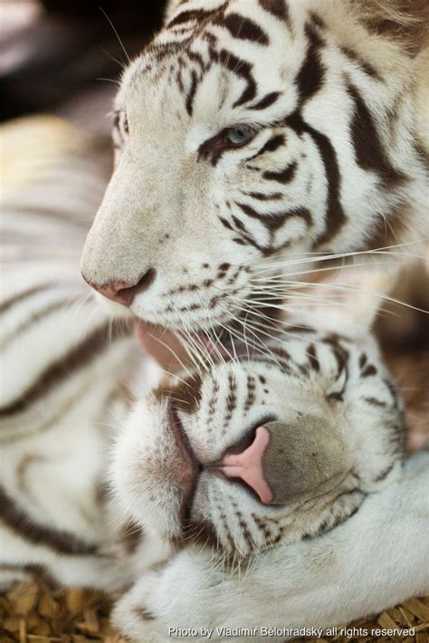 Best Images About The Animal Kingdom Pinterest