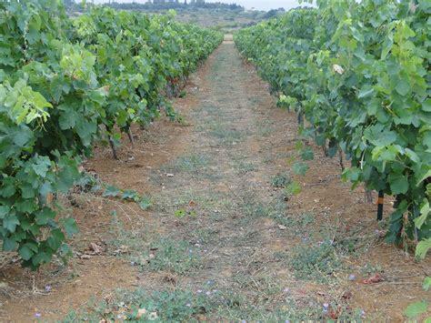 chambre agriculture grenoble 100 chambre agriculture du var vineyards st antonin