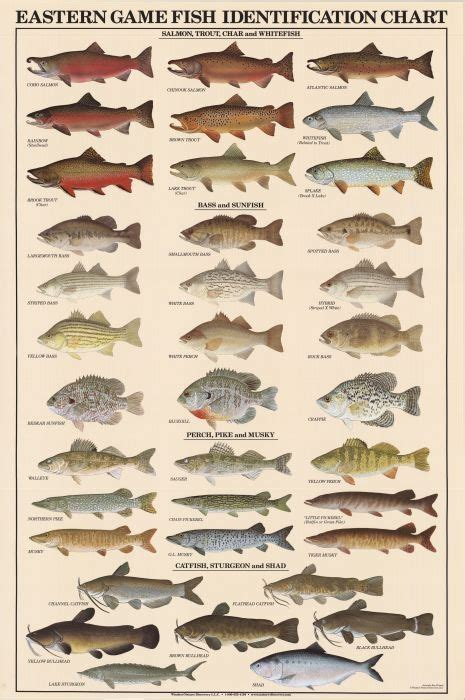 eastern game fish identification posters  park ave