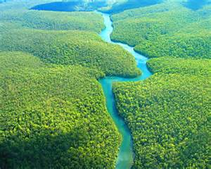10 Interesting Amazon Rainforest Facts   In Fact Collaborative