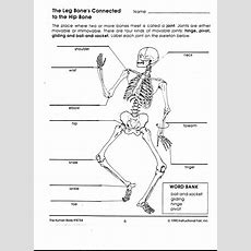 Human Body Interactions  Mrs O  Earth Science  Science Worksheets, Human Body Lesson, Human