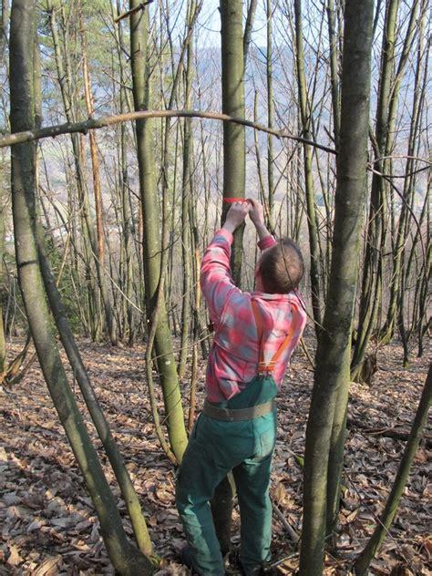 chambre agriculture haut rhin forestiers d 39 alsace actualités