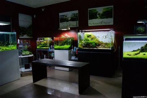 84 Best Aquarium Shop Ideas Images On Pinterest Aquarium