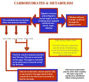 Carbohydrate Breakdown Chart