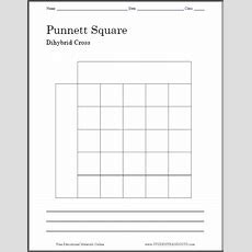 Punnett Square Dihybrid Cross Worksheet  Free To Print (pdf File) Two Versions One With A