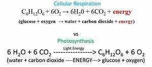 Photosynthesis Vs Cellular Respiration Equation | www ...