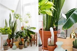 Plante Suspendue Intérieur : bien choisir sa plante d 39 int rieur clem around the corner ~ Teatrodelosmanantiales.com Idées de Décoration