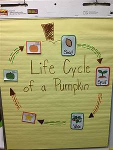 Anchor Growth Chart 1000 Images About Kindergarten Pumpkins On Pinterest