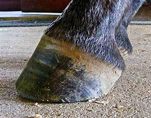 Hot Topics In Hoof Care  Part 4  The Abnormal Horse Hoof