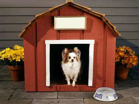 home  dog house