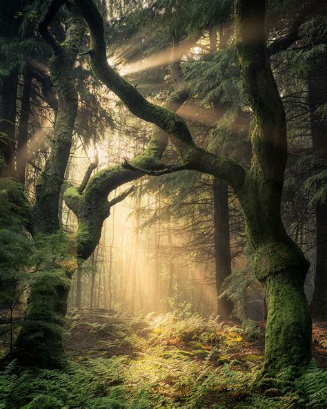 photo insight  simon baxter guardians   forest