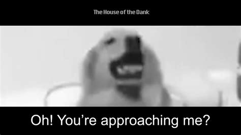 Doge witnesses the collapse of east germany. Jojo doge - YouTube