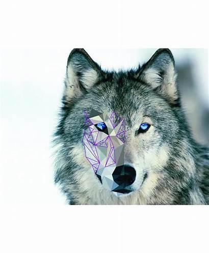Deviantart Lowpoly Wolf Process