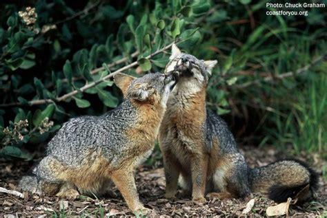 The California Coast Thecacoast Animal Antics