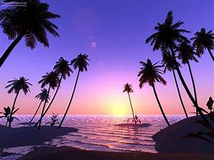 Beach With Palm Trees And Sunset | Desktop Backgrounds for ...