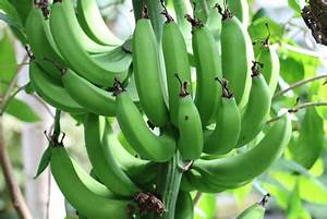 Verholzten Lavendel Schneiden : bananenbaum berwintern 7 tipps f r die bananenpflanze ~ Lizthompson.info Haus und Dekorationen